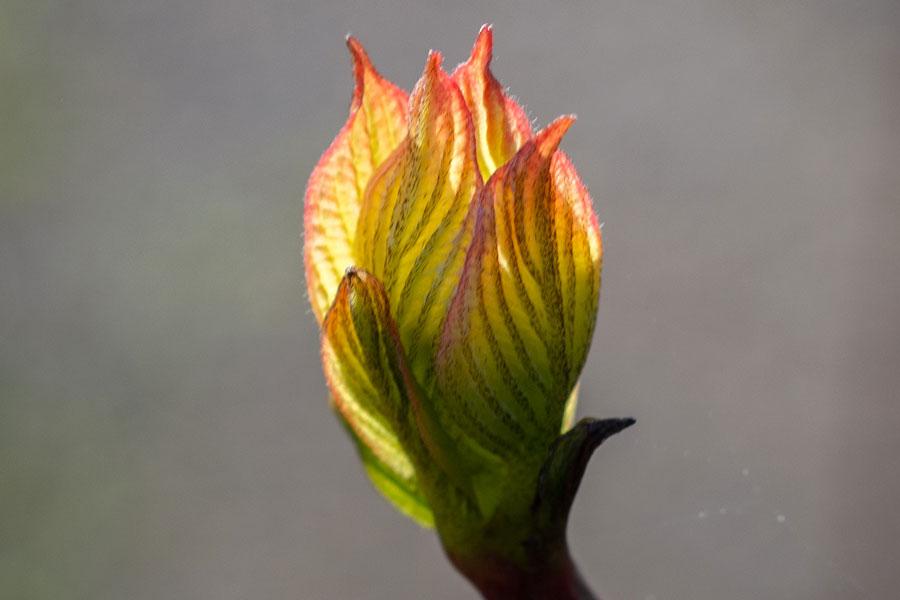 flowering bud retirement village surrey